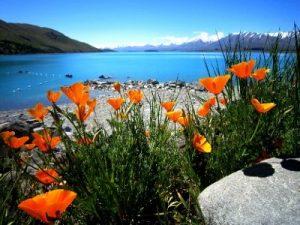 Nea Zilandia pou na pao, Που να πάω στην Νέα Ζιλανδία