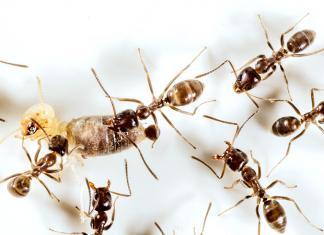 Πως να διωξω τα μυρμήγκια απο το σπιτι, Πως να διωξω τα μυρμήγκια φυσικα, pos na dioxso ta mirmiggia, xsefortotho, ξεφορτωθώ