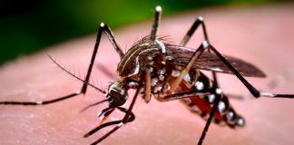 Πως να διώξω τα κουνούπια, Pos na diokso ta kounoupia